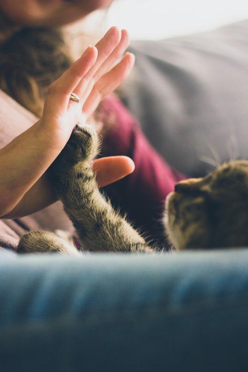 和貓咪當朋友