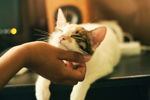 三步驟讓貓咪喜歡你