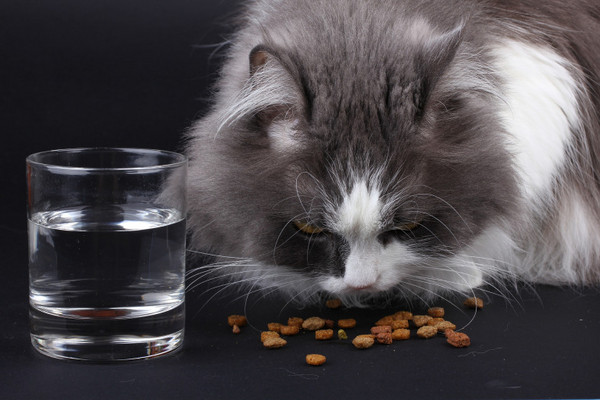 水對貓咪的重要性