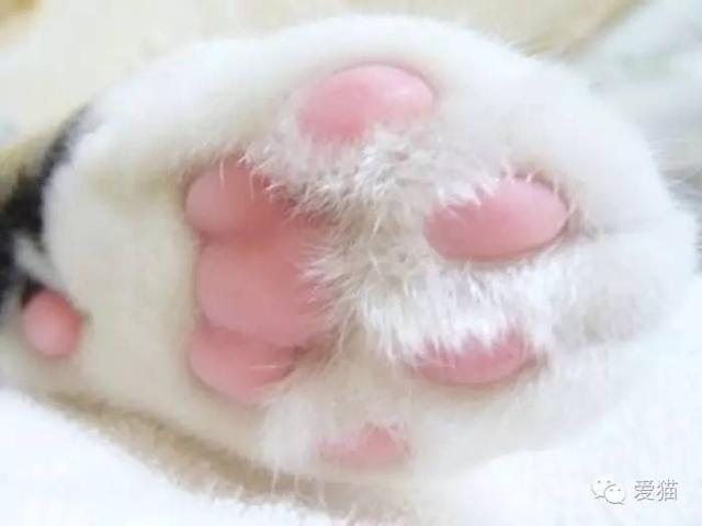亮粉紅肉球