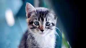貓咪眼睛會變色?