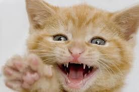 小貓咬我怎麼辦?