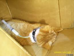 幫貓裝上餵食管