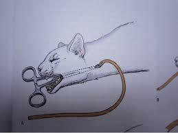 貓脂肪肝有辦法痊癒嗎?